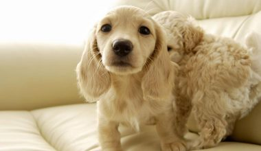 Le Pettorine per Cani