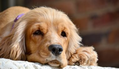 Dormire con il nostro cane fa bene o fa male?